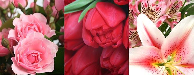 More Men Seek Alternative Flowers to Roses
